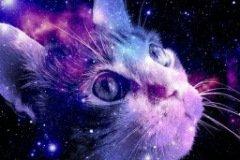 Аватарка космический кот