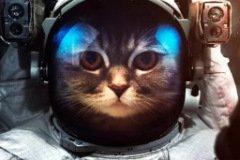 Аватарка кот в скафандре