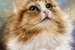 Аватарка кот в космосе