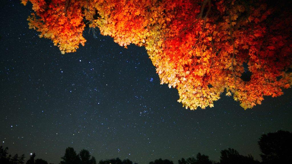 Звездное осеннее небо